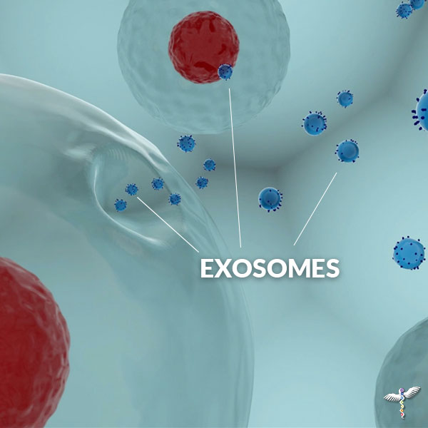 Exosomes in the cell membrane traveling to another cell to upregulate