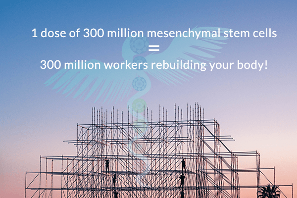 Builders working on scaffolding: 1 dose of 50 million mesenchymal stem cells = 50 million workers rebuilding your body!
