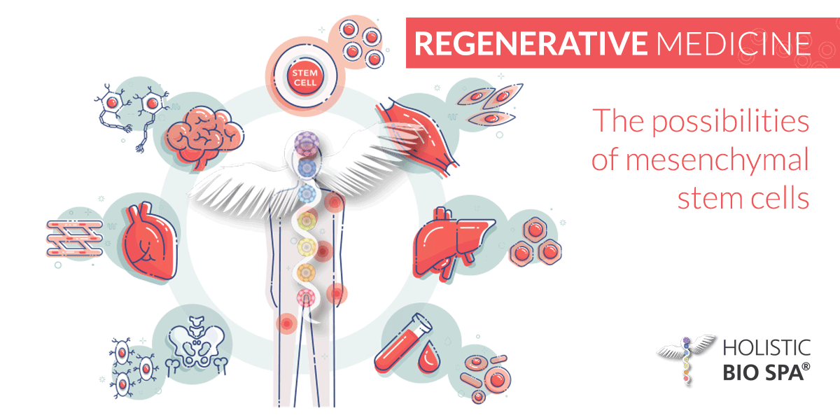 Infographic of regenerative medicine illustrating the types of cells mesenchymal stem cells can differentiate into: blood, bone, heart, liver, neuron, muscle